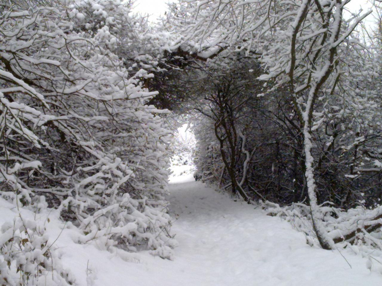 Promenade sous la neige dimanche 19/12/2010