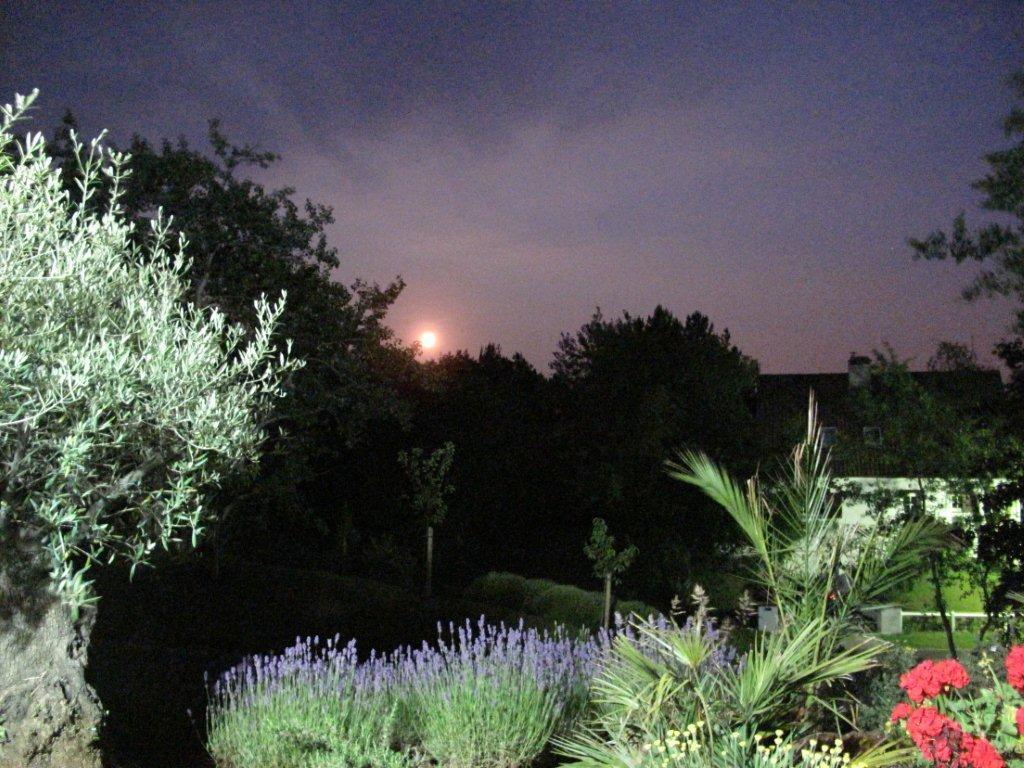 Le jardin quand la lune se lève (villa Les Agapanthes)
